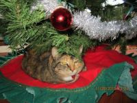 Boots loves napping under the tree
