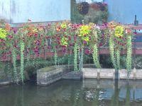 Bridge Flowers Rosporden