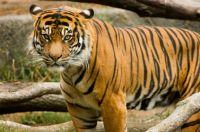 RIP Rakata - Woodland Park Zoo
