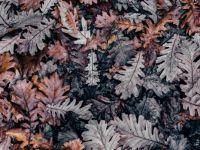 autumn_leaves_-hard
