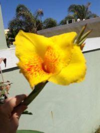 Yelow flower!