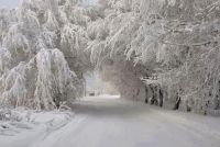 Winter beauti