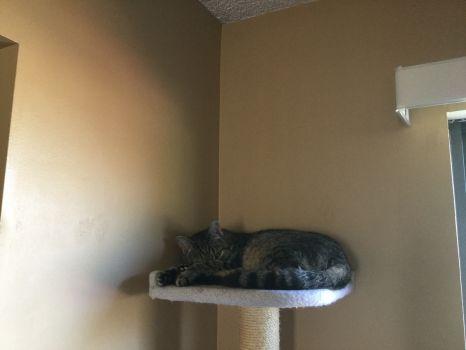 Petey practices self-isolation.