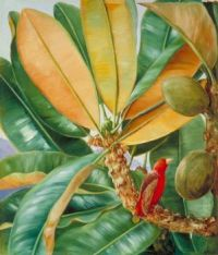 Marianne North (British, 1830–1890), Foliage, Flowers and Fruit of the Capucin Tree of the Seychelles