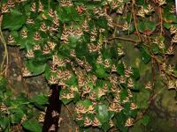 Island of Rhodes, Greece - The valley of Butterflies