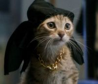 """""""Keanu"""" kitten in do-rag and gold chain"""