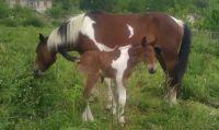 horses... behind my house