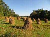 Hay on Poles