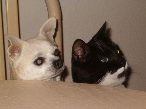 Gizzy & Merle