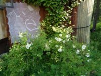 garden granny