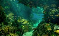 4  ~  'Magical Path Through A Underwater Forest'