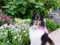 Cheri in the garden