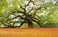 Series - Trees