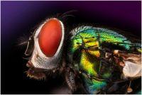 fly (macro)