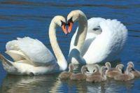 Rodina..