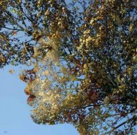 2 ~  'Face of leaves'