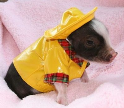 Piggy With Style!!