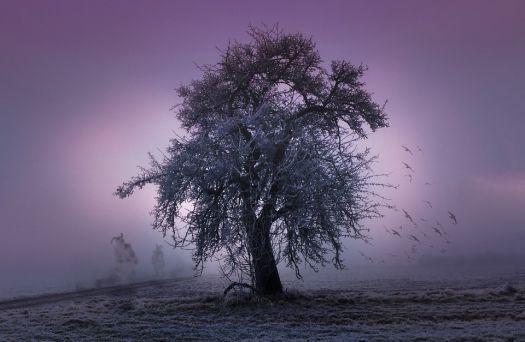 tree-2286510_960_720