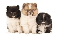 Little Puppy's 3