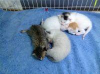 Mythbuster kittens