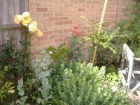 Garden - The Corner 1