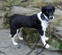 My Puppy, Sam
