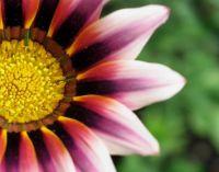Glorious Macro flower