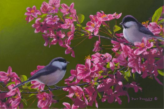 Chickadees in Pink