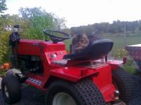 Ami on the Western garden-tractor