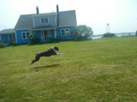 Flying boxer