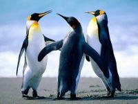 Penguin trio la la la