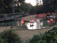 Flamingos!!