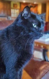 Curious George is Pondering