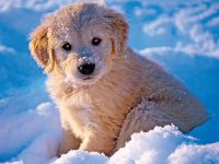 pup in snow