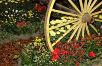 Theme: Wagon Wheels and Flowers