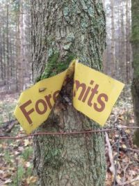 The forest has no limits!