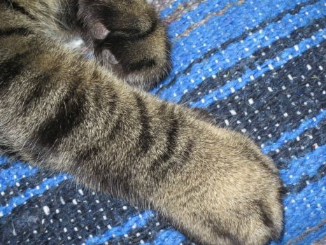 Max's paw - what a grip