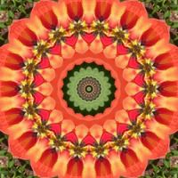 kaleidoscope 322 orange and green medium
