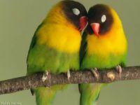 love-y birds