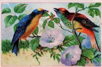 Themes Vintage illustrations/pictures - Birds