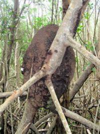 Termite nest                                                  319-001