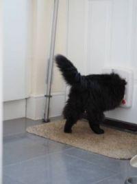 Sid 'scape - I need a bigger cat flap!