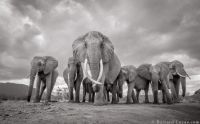 Elephant Queen and family