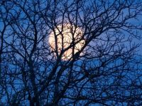 Úplněk / Full moon