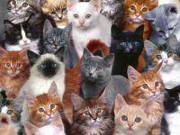 Cat Collage CHALLENGE