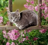 Kitten Among the Flowers