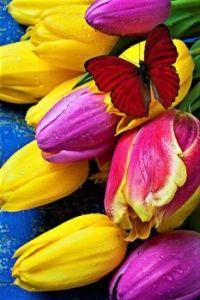 Tulips -Garry Gay