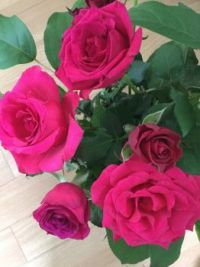 Gorgeous roses from E