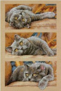 Dimensions' Max the Cat