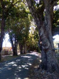 Mango Avenue, Eimeo, Queensland, Australia
